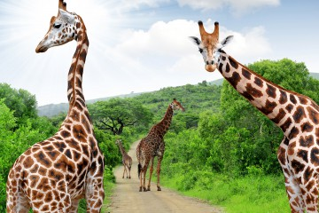 South Africa 16 Day tour with Flights