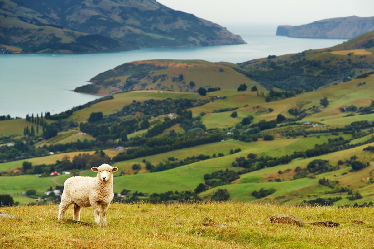 New Zealand North & South Island tours