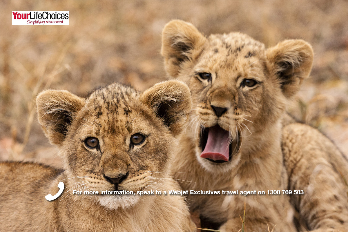 Wild Africa Greater Kruger Experience – Your Life Choices