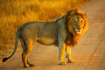 Kruger to Cape Town – Africa safari with flights – Deposit now for 2017