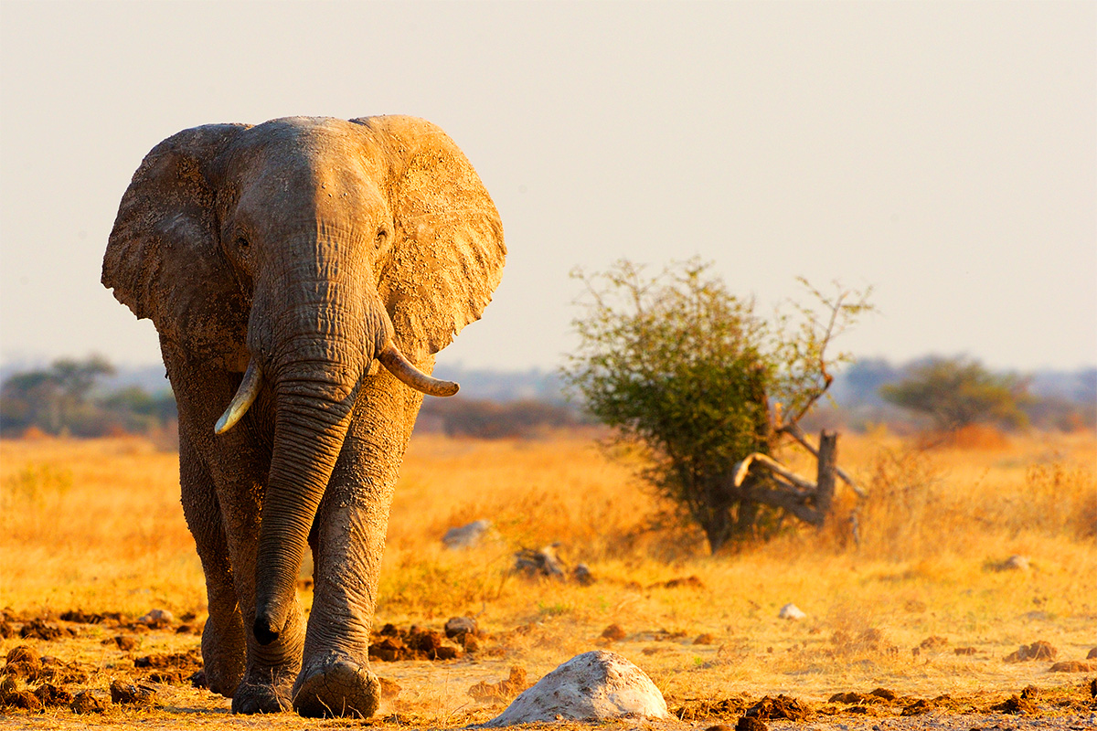 Africa – Botswana, Victoria Falls, Kruger Private Safari – Interest Free – Limited Offer