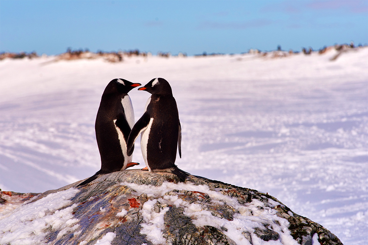Luxury Antarctica cruise with Buenos Aires & Santiago – Interest Free – Limited Offer