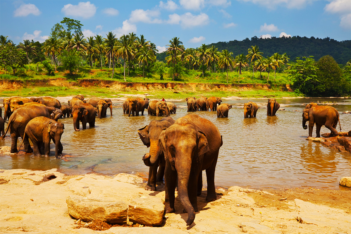 Highlights of Sri Lanka