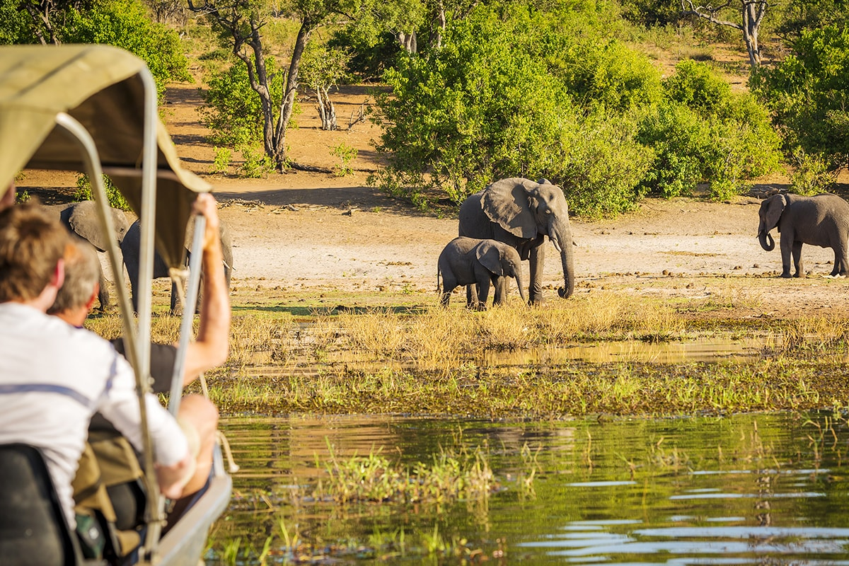 17 Day Spectacular Blue Train, Botswana, Kruger & Cape Town – End of Year Sale