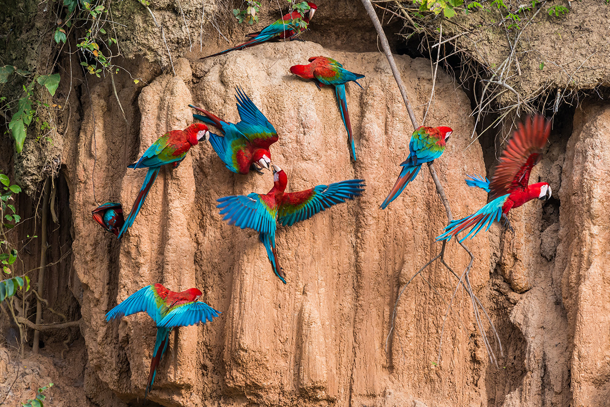 18 Day Best of Peru, Bolivia and the Amazon