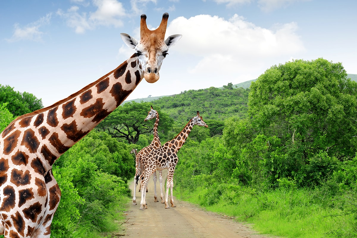 17 day African safari and luxury Rovos Rail with flights