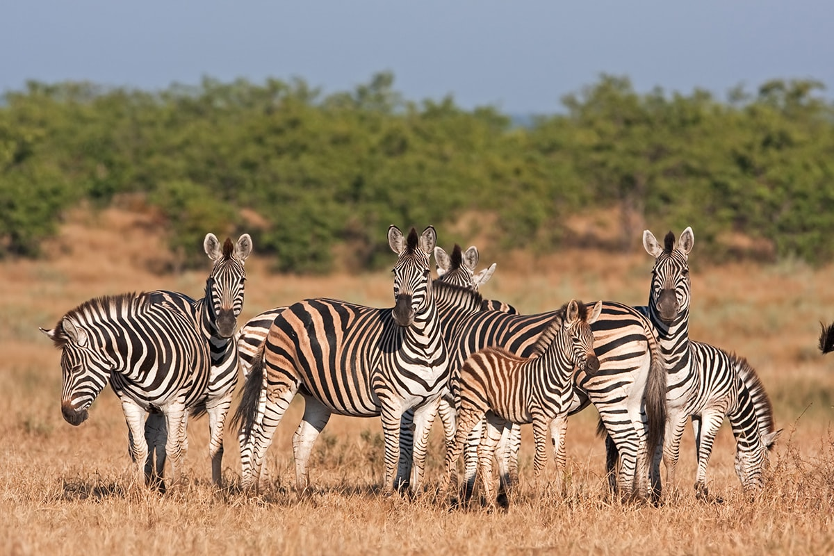 14 day Kruger and Kenya Safari with flights