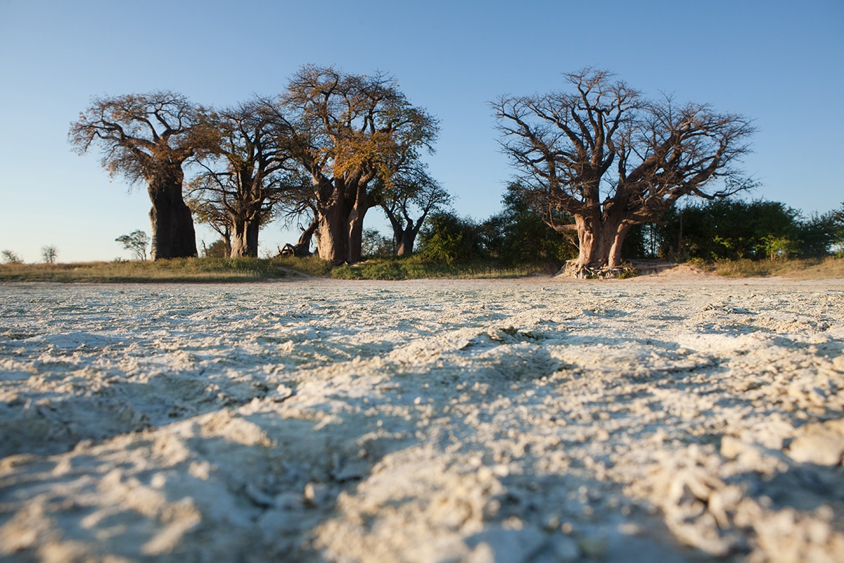 12 day Botswana Safari with Okavango Delta and flights