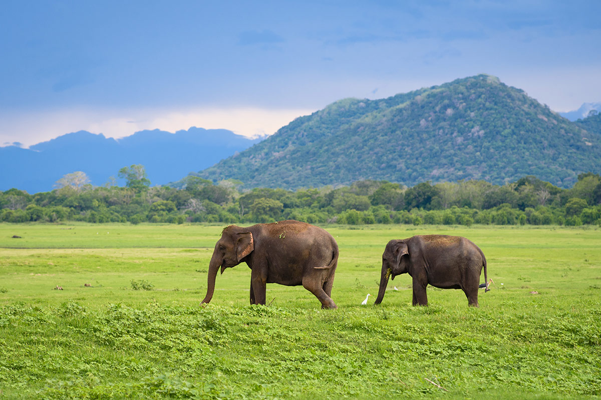 14 day Taste of Sri Lanka tour with all-inclusive Maldives beach break and flights