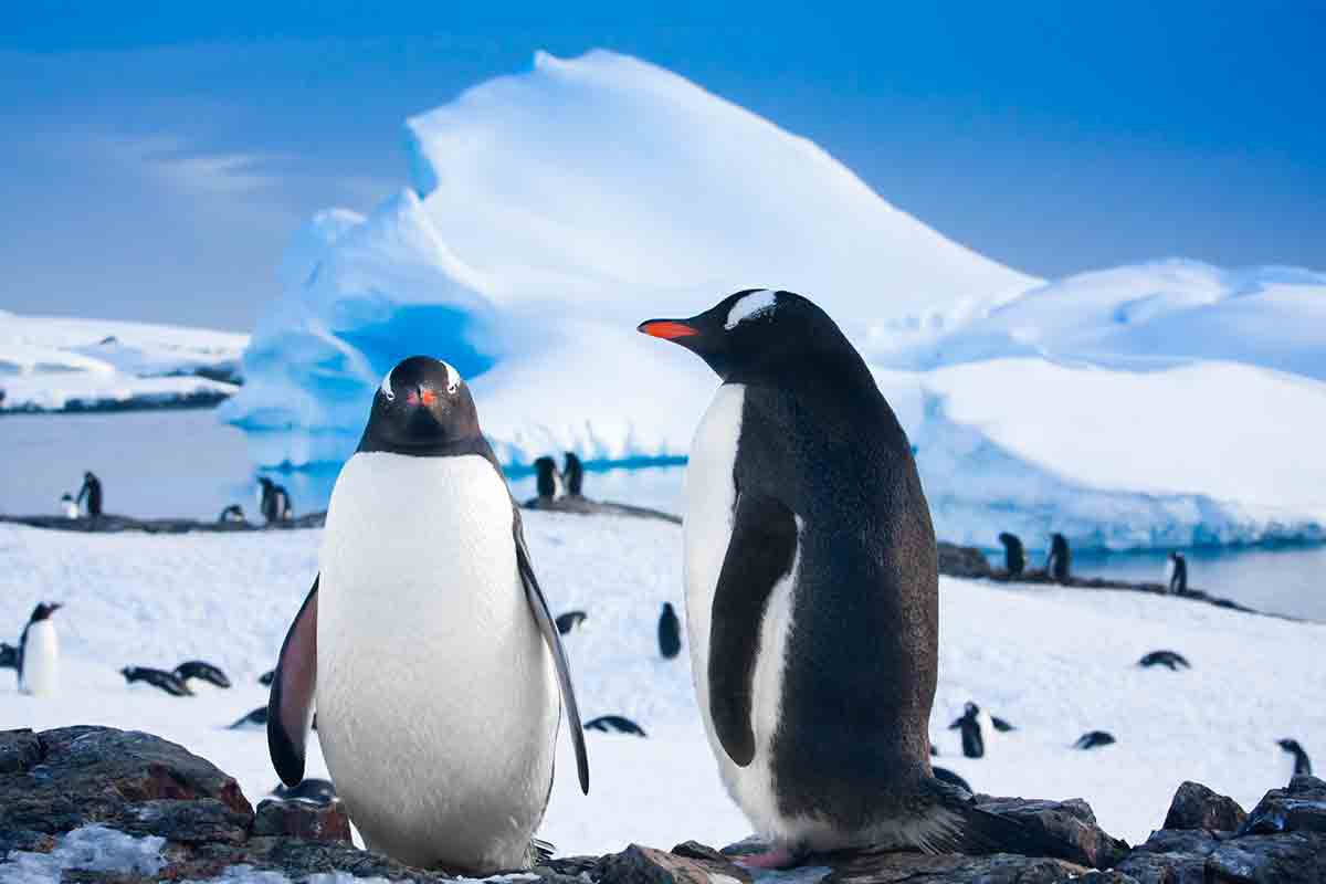 17 day Best of Antarctica Expedition cruise with flights