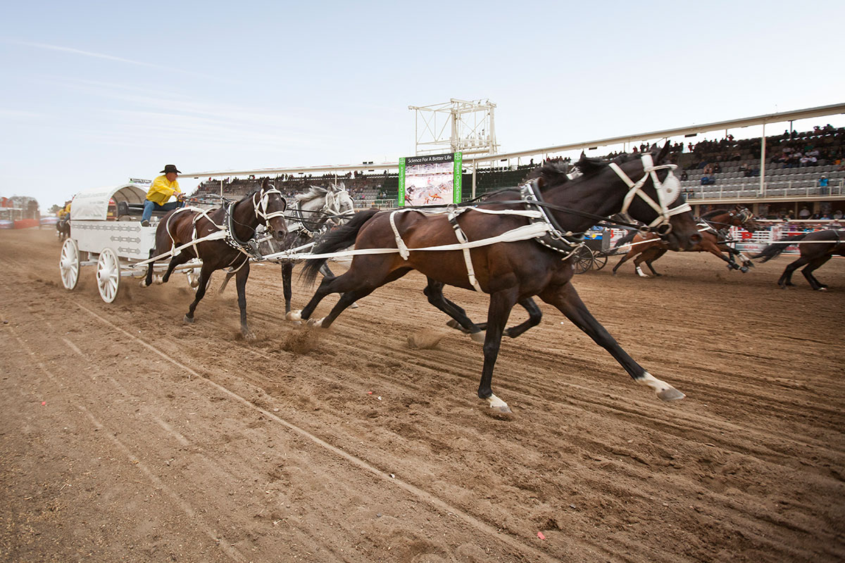 17 Day Calgary Stampede With Rockies Tour Canada Tours