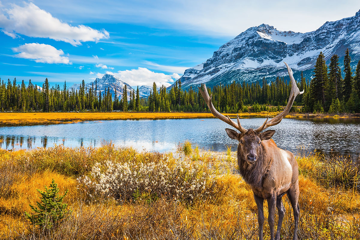 14 day Highlights of the Rockies tour with Alaska cruise and flights