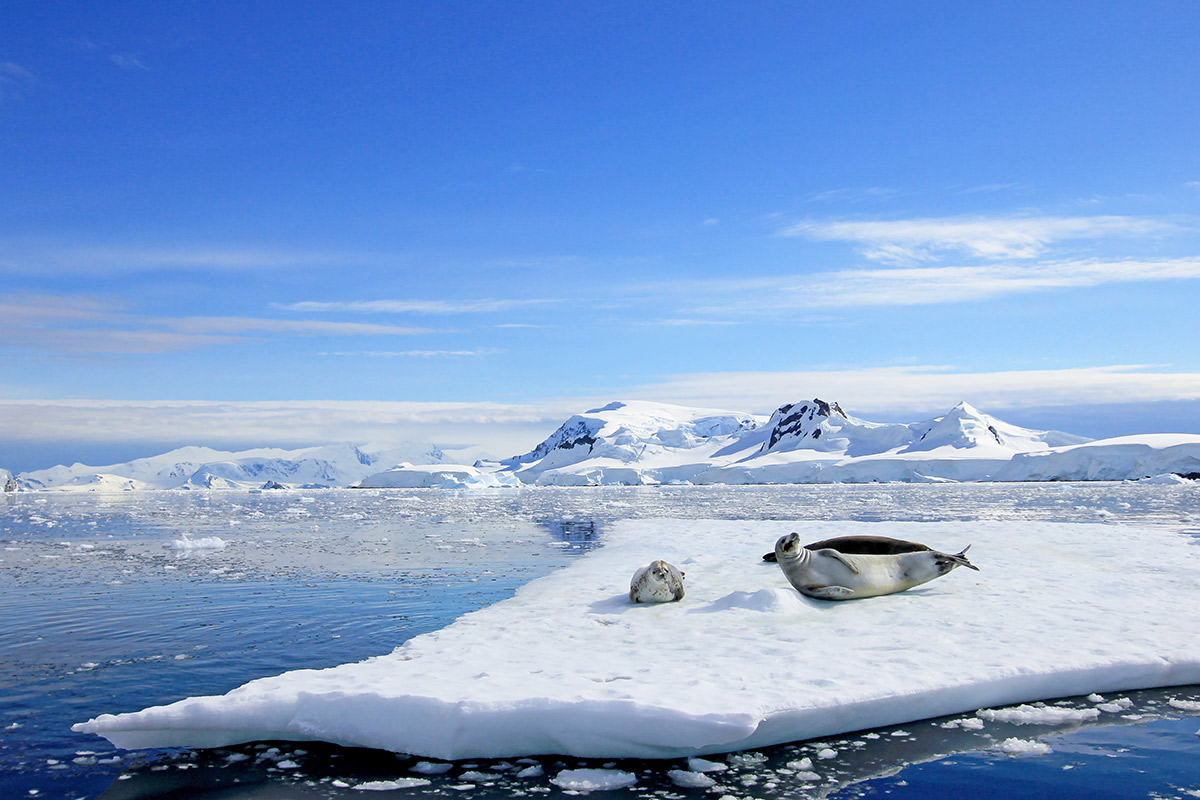 23 day Antarctica Expedition cruise with Highlights of South America tour and flights