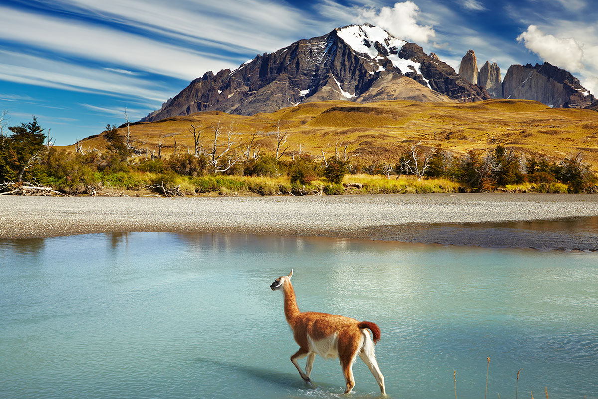 24 day Antarctica, Patagonia and Chilean Fjords Expedition cruise with flights