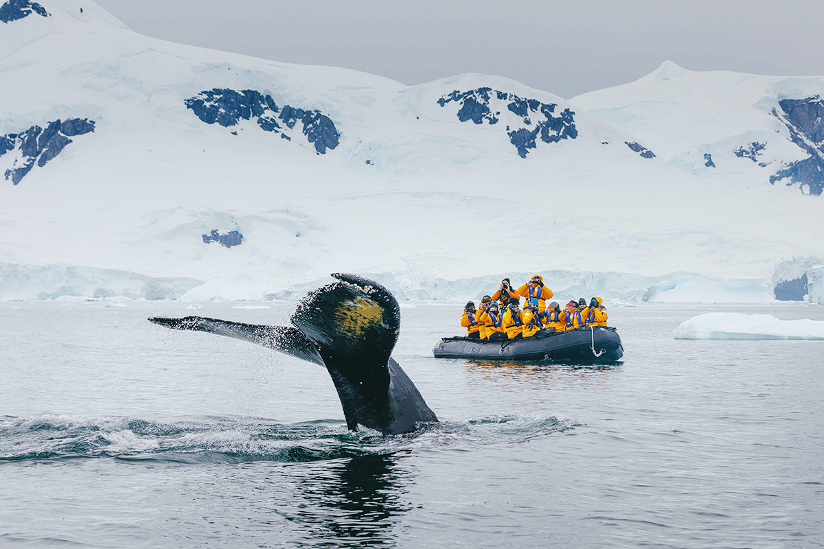 25 day Ultimate Antarctica Expedition cruise plus fly the Drake Passage with South America tour and flights