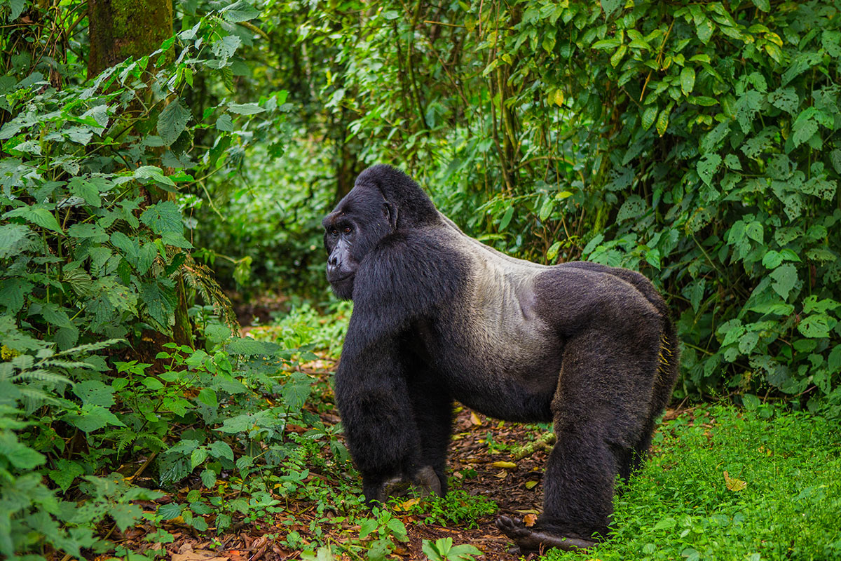 14 day East African Grandeur with magnificent Gorilla trek and flights