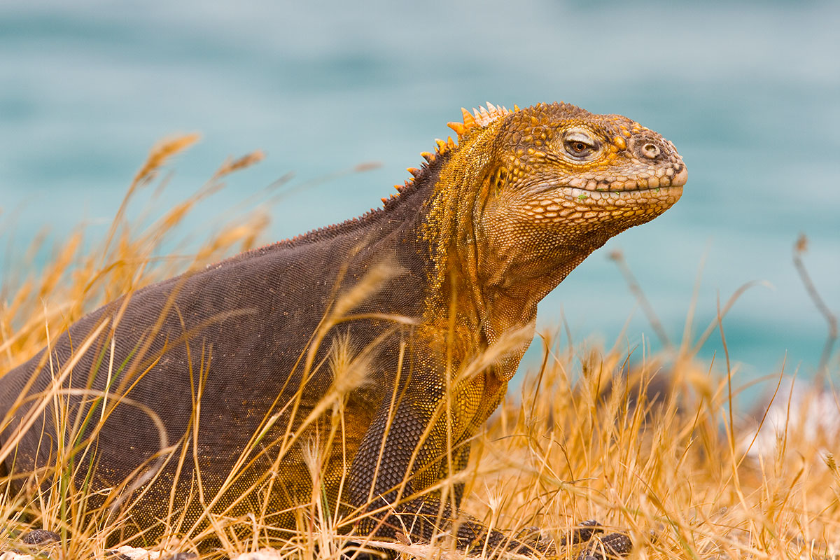20 day Grand South America tour with Galapagos Islands, Amazon Jungle and flights