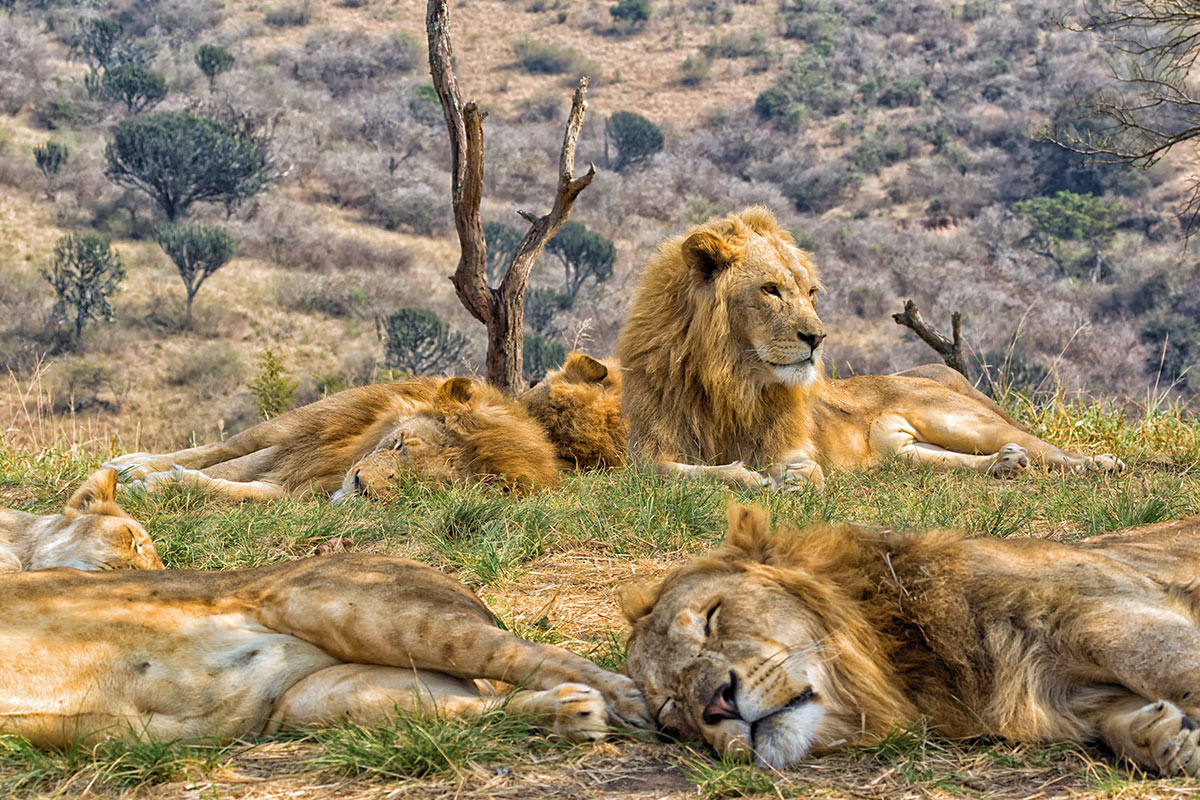 33 day Europe to Africa cruise with Kruger safari and flights