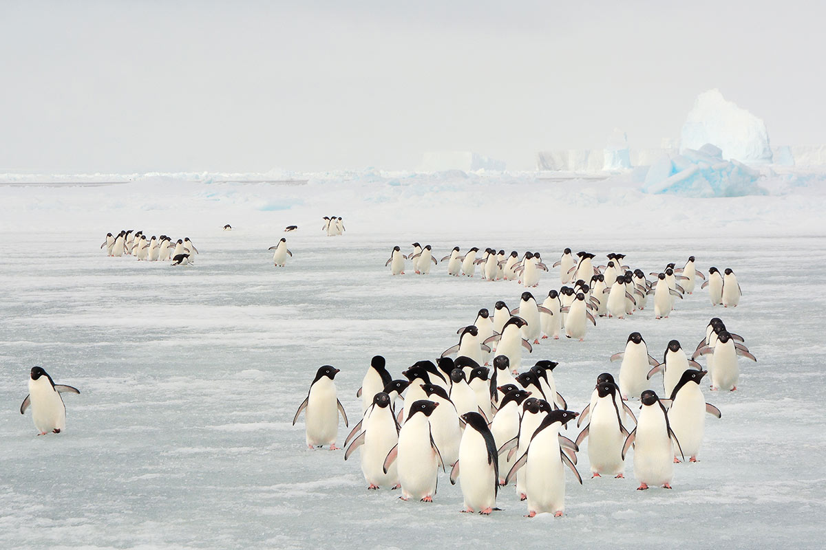 22 day Solar Eclipse Antarctica Expedition cruise with flights